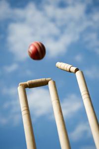 Cricket Large